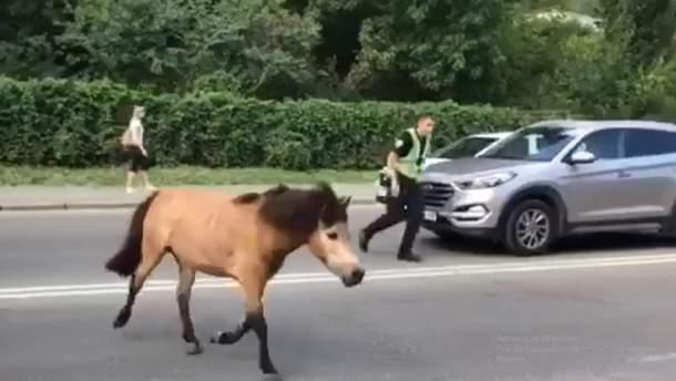 Пони в Киеве