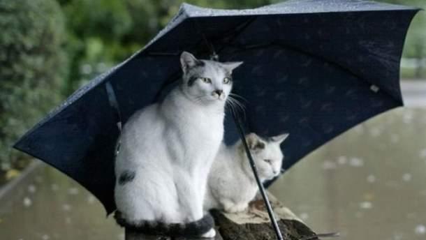 Прогноз погоды 5 августа 2019 Украина – прогноз погоды на день
