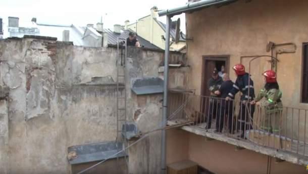 Порятунок кота у Львові