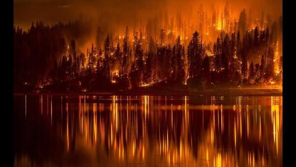 Росіяни підрахували суму збитку від лісових пожеж