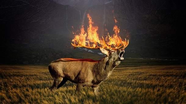 Пожежі у Сибіру завдали непоправної екологічної шкоди планеті