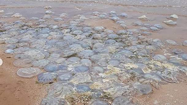 Берег Азовского моря завалило тысячами мертвых медуз