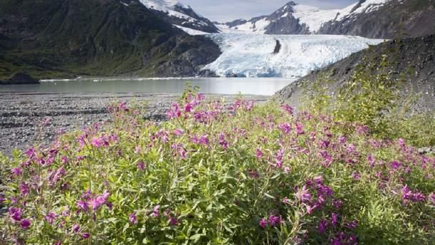В водах Аляски розтанув лід