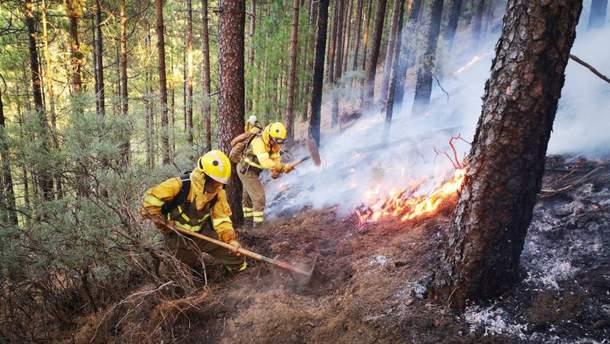 Пожарные тушат леса на острове Гран-Канария