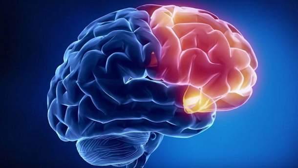 Жовч захищає мозок від окислення