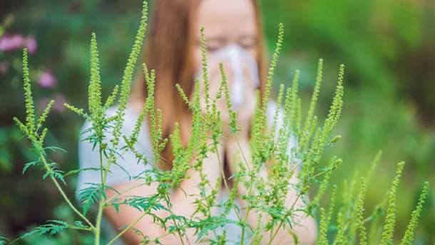 Алергія на амброзію – лікування і симптоми алергії на амброзію