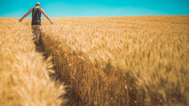 Рынок земли в Украине: сколько будет стоить украинский чернозем