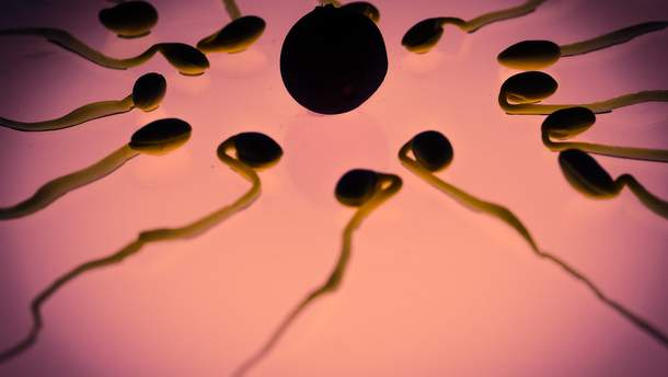 Ученые научились управлять сперматозоидами