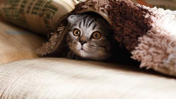 Создали вакцину для кошек, которая делает их гипоаллергенными