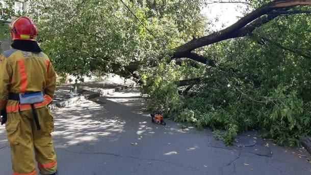 В Киеве на женщину упало большое дерево