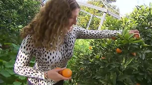Жінка полюбляє не м'ясо, а фрукти