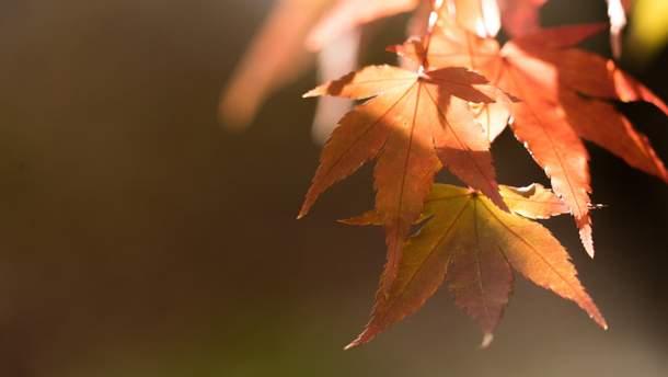 Прогноз погоды на 16 сентября: холодная осень отступит на короткое время