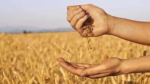 Зерновые аграрии в Украине