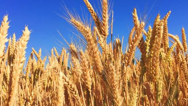 Чи справді ГМО шкідливе