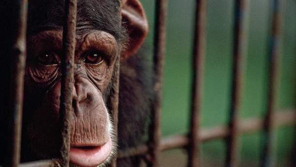 Мінкульт більше не купуватиме тварин для державних цирків