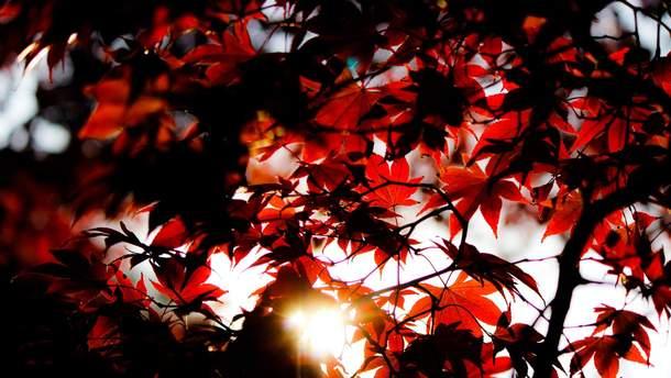 18 октября – какой сегодня праздник и что нельзя делать в этот день