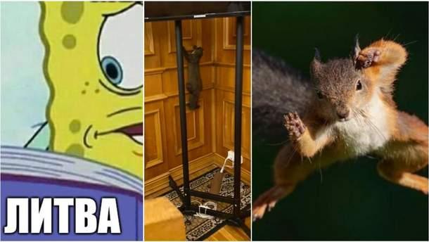 Найсмішніші меми тижня: Литволатвія, куниця в Раді та білка-кунфу
