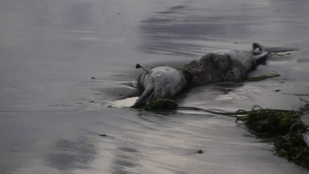 В Одесской области мертвого дельфина выбросило на пляж