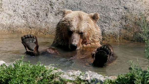 Медведи в Карпатах не могут уснуть