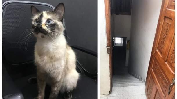 Кішка Гатубела, яка врятувала від падіння з цих сходів малюка Самуеля в Колумбії