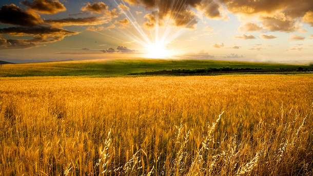 Спешка в земельной реформе неуместна, – эксперт