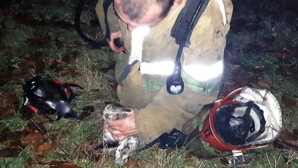 Рятувальники витягли з вогню крихітне кошеня: зворушливі фото
