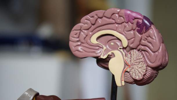 В мозку знайшли рецептори поганого настрою