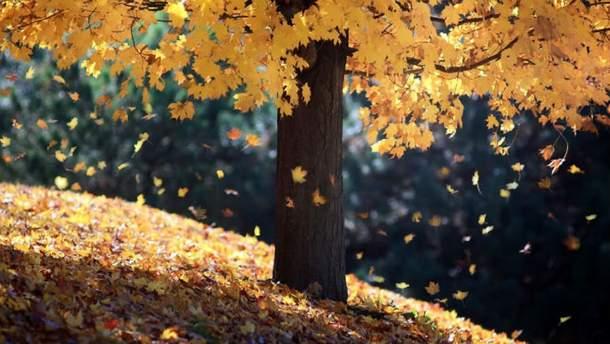 Погода 13 листопада 2019 Україна: яку погоду обіцяє синоптик