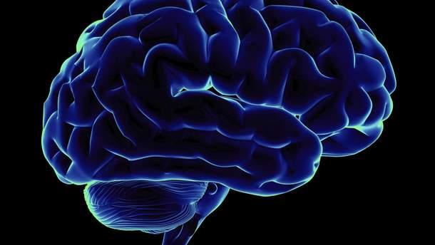 Вчені розповіли, до якого віку мозок продукує нейрони