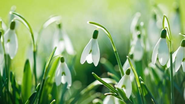 28 марта – какой сегодня праздник и что нельзя делать в этот день