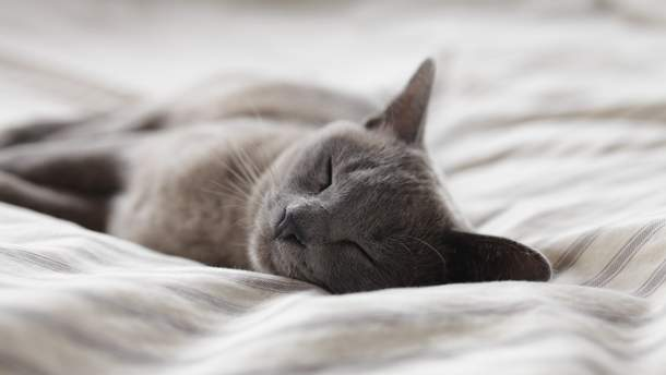 Чи можна дорослим людям спати вдень