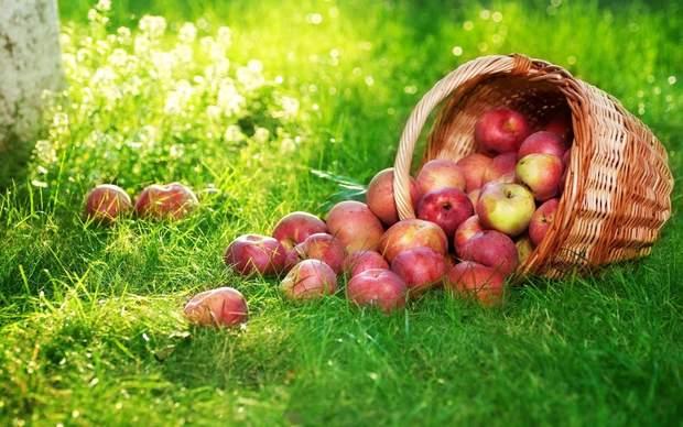 Яблучний Спас: історія свята, прикмети, що можна і не можна робити в цей день