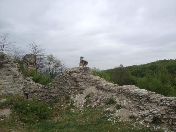 Залишки мурів Галицького замку