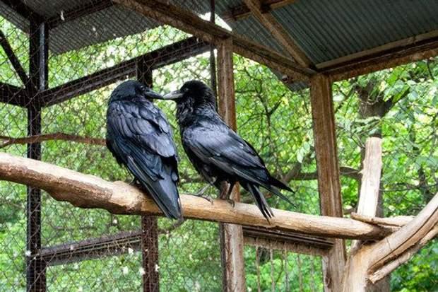 Дворик з воронами, Київ