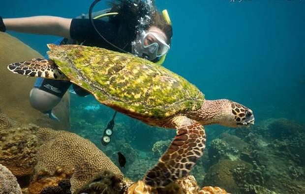 Черепаховий острів - тут варто вчитись дайвінгу