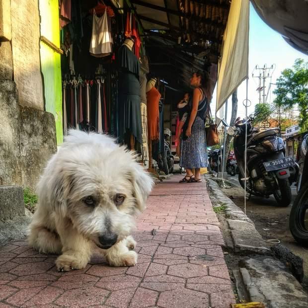 День безпритульних тварин