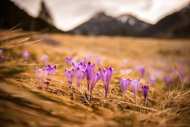 Квіти зацвіли
