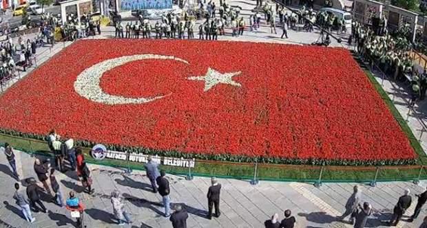 тюльпани туреччина