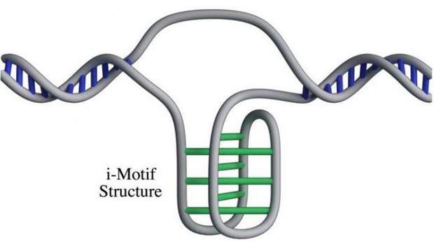У клітинах людини виявили нову форму ДНК