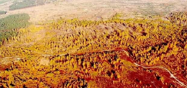 Рудий ліс у Чорнобилі