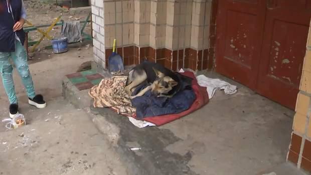 Собак лікують просто на вулиці