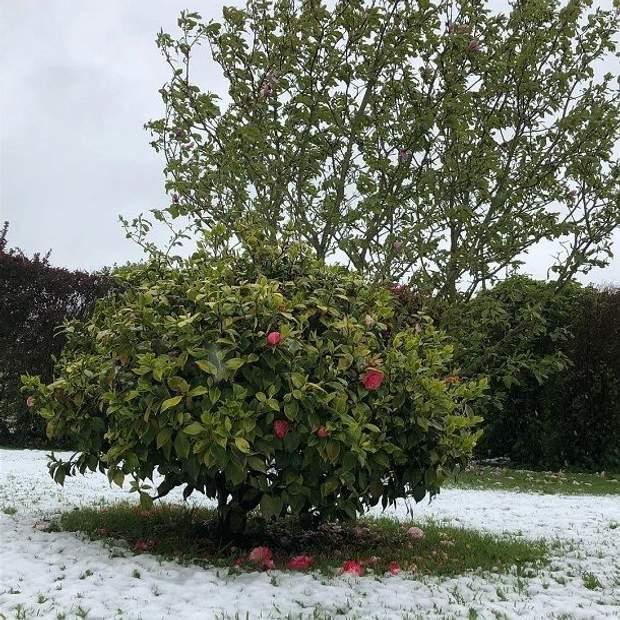 Сніг у Франції