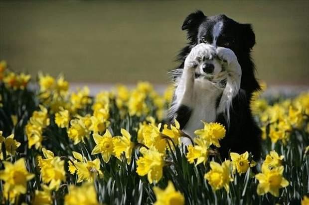 Що робити, коли є алергія на цвітіння