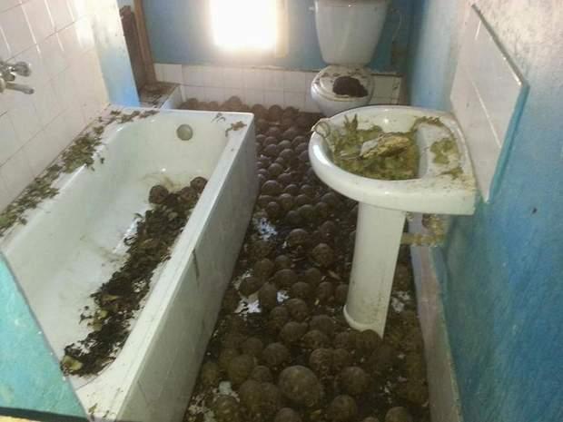 Черепахи у будинку