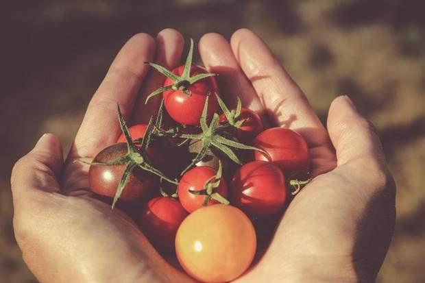 Обирайте помідори з повністю цілою шкіркою
