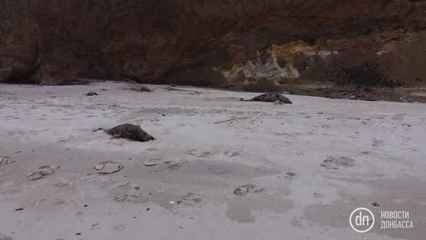 Дельфіни, смерть, Азовське море, Маріуполь