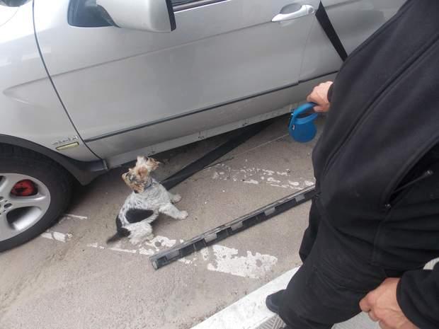 Прикордонний собака Альфа натренований на пошук наркотичних речовин