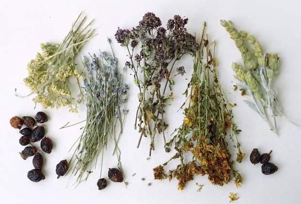 лікарські трави