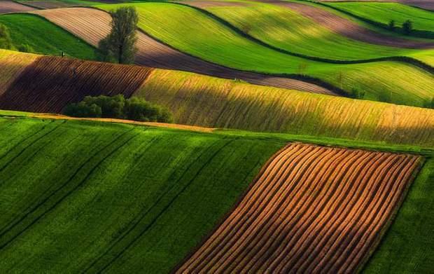 Як виглядають польські поля/ Пржемишлав Крюк
