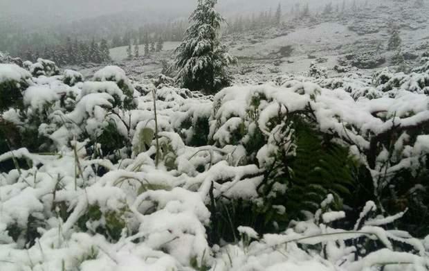 Карпати, сніг, діти, наметовий табір, полон